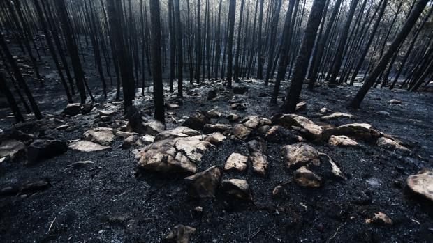 La furia del fuego da paso a un paisaje desolador en Galicia