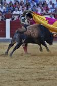 La gloria de José Tomás y Manzanares en Valladolid, foto a foto