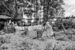 Los campos de la droga de las FARC, en imágenes