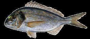 Diez curiosidades sobre los peces que acaban en tu plato