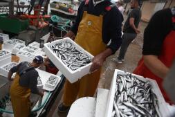 La lonja de Cádiz, en imágenes: descarga y clasificación del pescado en el muelle
