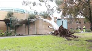 Australia del Sur se recupera de las inundaciones por el fuerte temporal