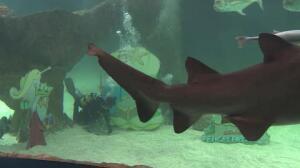 Zoo Aquarium de Madrid pone su atípico Belén