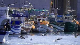 Barbate, una vida dedicada a la pesca del atún