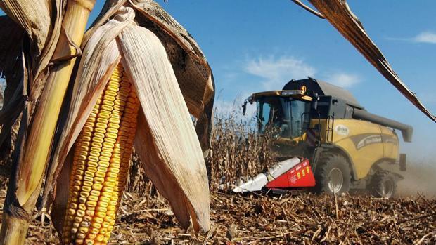 Inventan en Córdoba un material de construcción a partir de los residuos del maíz