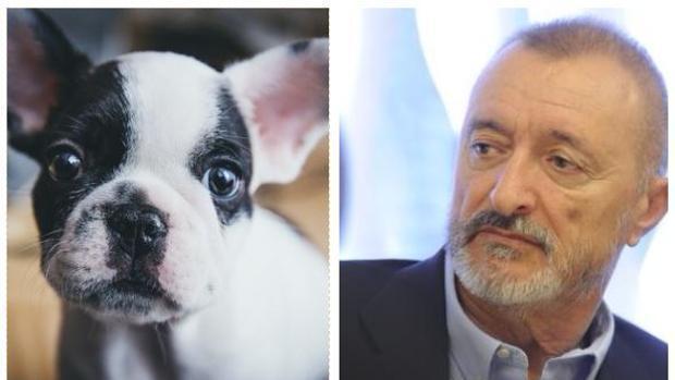 La carta de Pérez-Reverte que debes compartir cada Navidad: «No compres ese perro»
