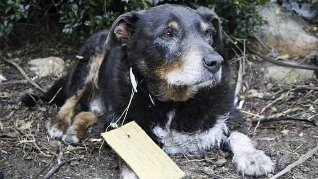 La entrañable historia del perro perdido que se convirtió en héroe
