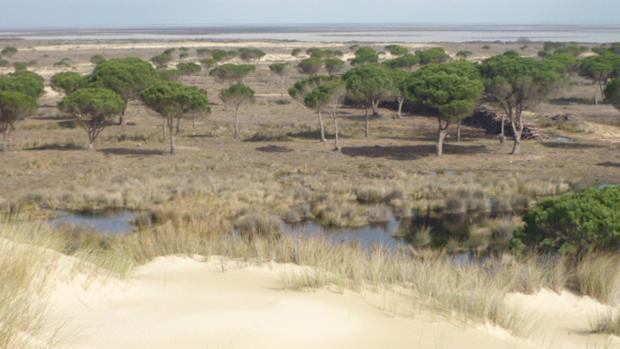 El Defensor del Pueblo pide evaluar el impacto de los proyectos de inyección de gas en Doñana