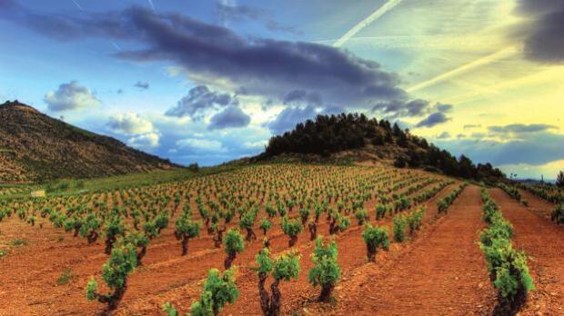 Diez razones por las que Rioja es la joya del enoturismo en España