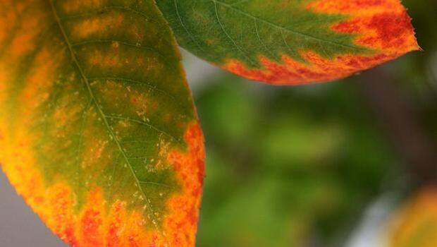 Equinoccio de otoño: a partir de hoy la noche le quitará tres minutos a cada día