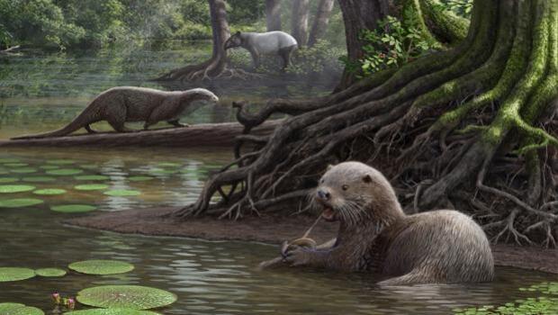 La nutria del tamaño de un lobo que dominaba los humedales de China