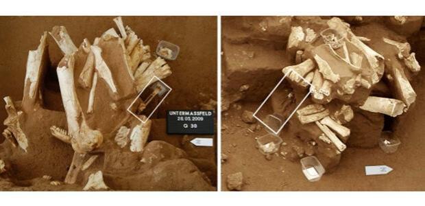 Un estudio sobre homínidos de un millón de años, en duda por utilizar huesos «robados»