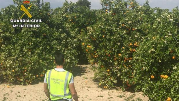 Estafa 400.000 euros en mandarinas que enviaba a Francia
