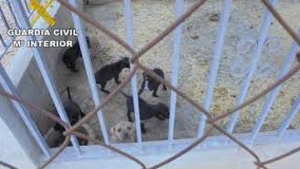 Clausuran un criadero ilegal de falsos perros de raza que vendían por internet
