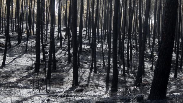 La factura de la ola de incendios en Galicia: más de 200 millones de euros