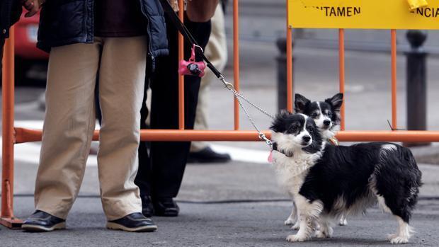 Mascotas con miedo a los petardos: los veterinarios aconsejan iniciar los tratamientos antes de Fallas