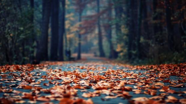 Las hojas en el asfalto, más peligrosas de lo que te imaginas