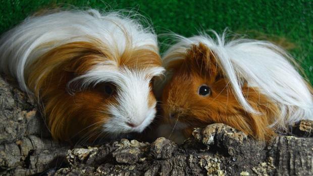 La adopción de animales exóticos, una realidad poco conocida