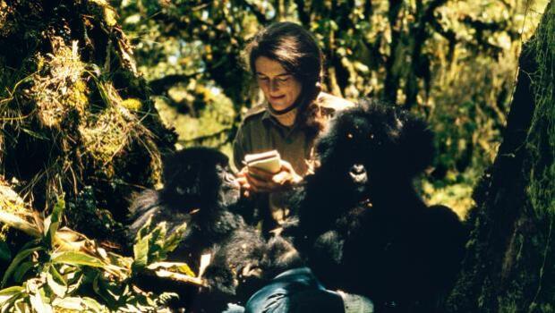 Dian Fossey, el ángel guardián de los gorilas que murió acuchillada en la niebla