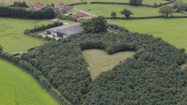 YouTube: El hombre que creó un bosque con forma de corazón en memoria de su esposa fallecida