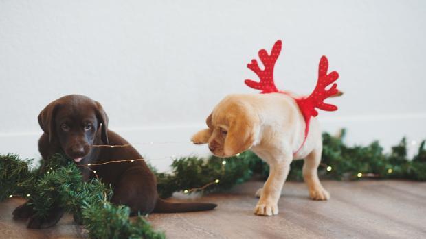 Estas precauciones debes tomar con tus mascotas en Navidad