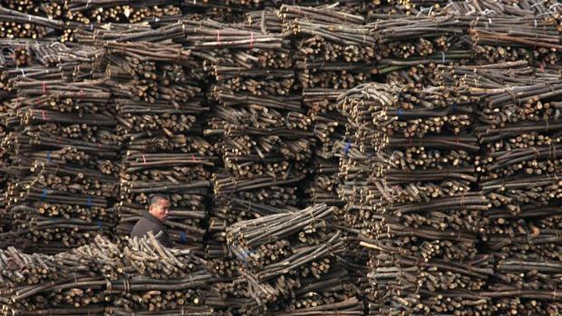 Crean una madera más resistente que el acero