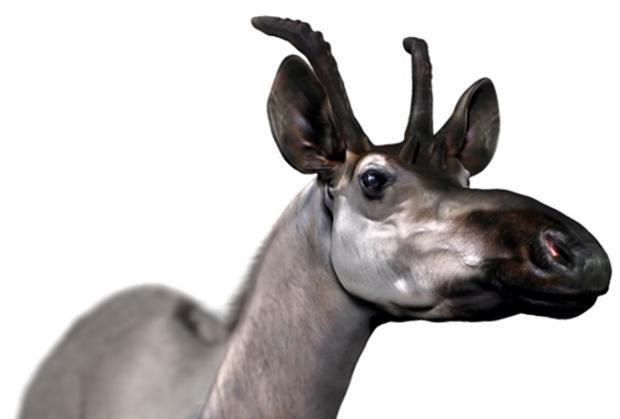 Hallados en Madrid los restos fósiles de la jirafa gigante más primitiva