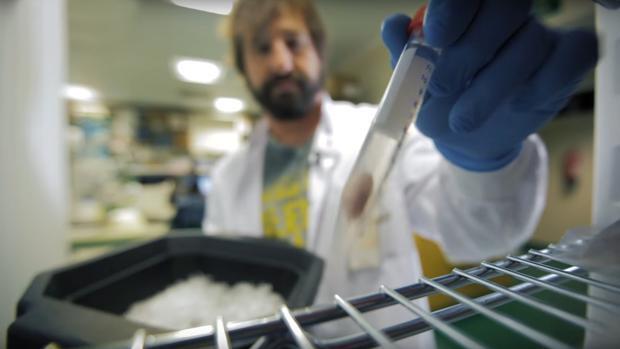 Casi 80 científicos alertan a Rajoy de que el CNIO y el CNIC «quedarán desmantelados»