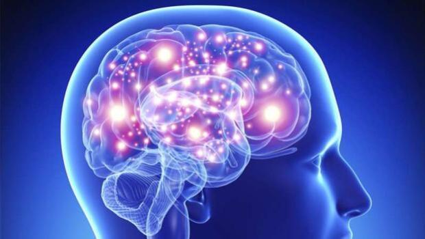 Detectan en el cerebro las diferencias que nos hacen humanos