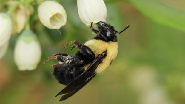 Nuestra supervivencia no solo depende de las abejas de la miel