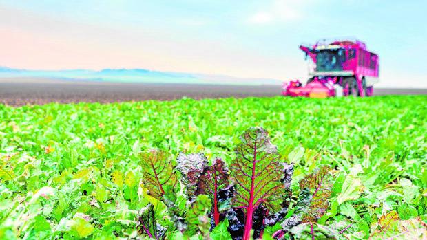 Ya se pueden pedir las ayudas europeas al desarrollo rural en Sevilla