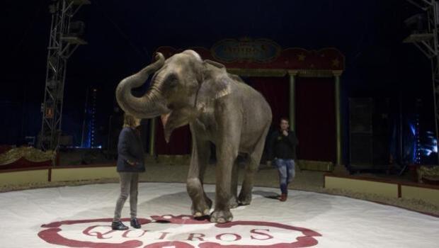 Luz verde a la ley que prohibirá los circos con animales salvajes