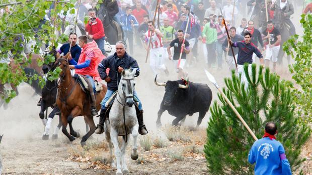 Desestimado el recurso de Tordesillas contra la Junta por prohibir el Toro de la Vega