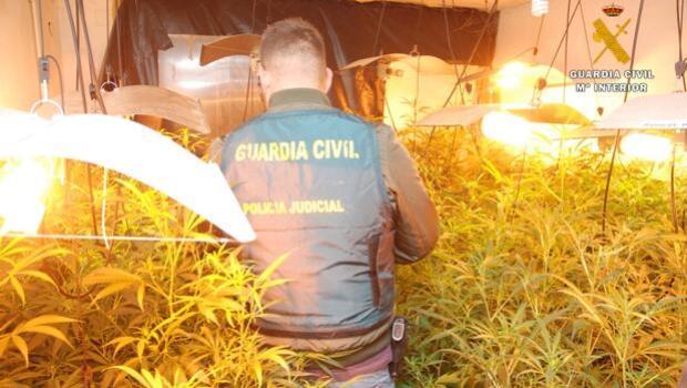 Detenido un hombre de 65 años con un laboratorio con más de 200 plantas de marihuana