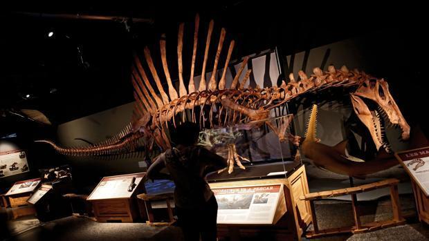 Un viaje al Cretáceo en el Museo de las Ciencias de Valencia