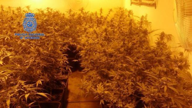 Detienen a un presunto maltratador y descubren cien plantas de marihuana en su casa