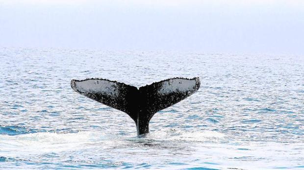 El nivel del mar puede subir tres metros en el año 2100