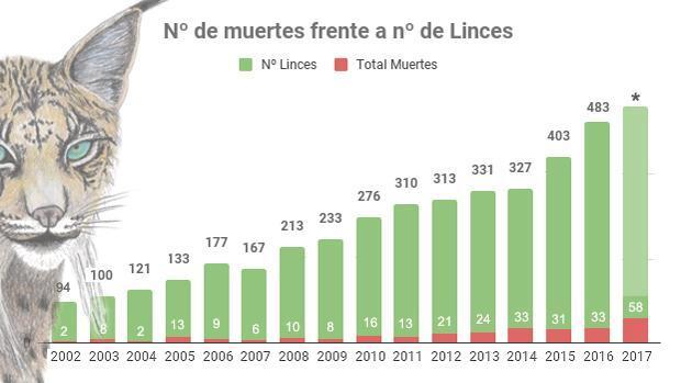 2017, un «annushorribilis» para el lince ibérico con 58 ejemplares muertos