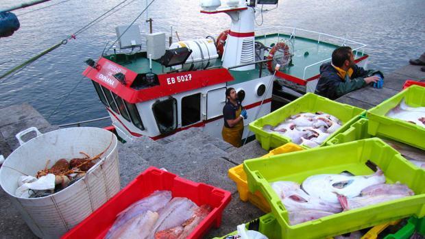 Pesca eléctrica: prohibición total y definitiva en Europa