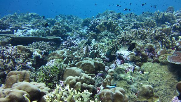 La acidificación del Atlántico Norte alterará los ecosistemas profundos