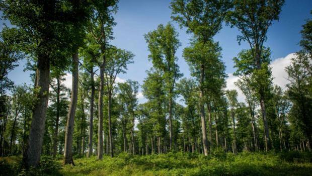 Los bosques más diversos son más resistentes a la sequía