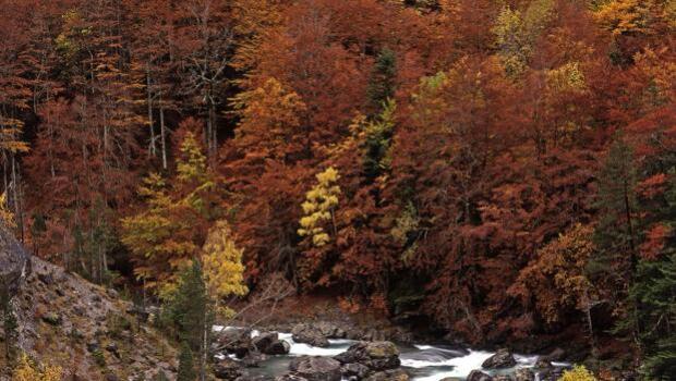 Un bosque casi perfecto para el próximo fin de semana