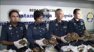 Encuentran 330 tortugas de la especie más amenzada del mundo, ocultas en maletas