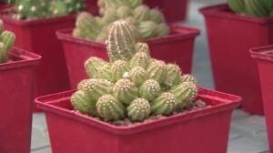 Desert City, el oasis de cactus que llega a Madrid