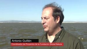 """El proyecto """"Por más metros de costas limpias"""" renueva el Parc Natural de l'Albufera"""