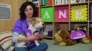 Mascotas para mejorar el bienestar de sus dueños