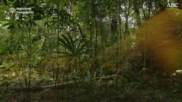 Descubren una megalópolis maya oculta en la selva de Guatemala