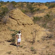 Las gigantescas estructuras creadas por las termitas