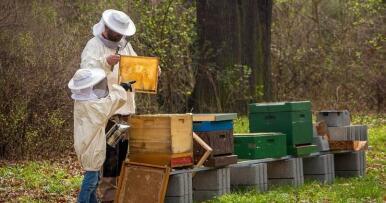 Convocadas subvenciones para investigación aplicada en el sector apícola