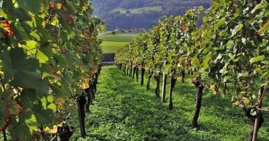 Reclaman «medidas extraordinarias» para evitar el colapso del mercado vitivinícola